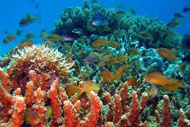 Balicasag Diving